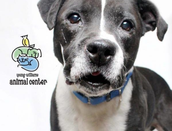 Dr. Heinz is a 12-year-old senior who is set in his ways, loves a good nap, and will just hang out all day with the person he loves. He isn't fond of cats, so if you've got those furry creatures in your home, this isn't the dog for you. Info: young-williams.org
