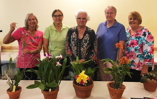 """On Monday, Jan. 14, Calusa Garden Club of Marco Island met at Wesley United Methodist Church. Charlette Roman and Linda Shockley presented a workshop on orchid varieties and orchid care to a standing-room-only crowd of over 36 club members. Above, a table of orchids from Shockley and Roman's collection, showing left to right a Dendrobium orchid with keikis (offshoots), a Cattleya with small blooms, a Cattleya with a large yellow """"corsage"""" bloom, a Dendrobium with orange composite flowers, and a Phalaenopsis that is not blooming. Behind the orchid specimens are left to right, Donna Kay (club co-chair of Horticulture Workshops) holding a Vanda orchid, Roman, Sandy Wallen (club president), Shockley and Sue Oldershaw (club co-chair of horticulture workshops)."""