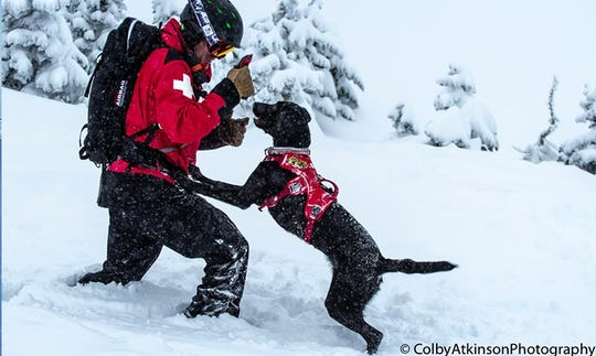 At bigger mountains out West where snow is abundant, dogs are trained to help out with avalanche rescues.