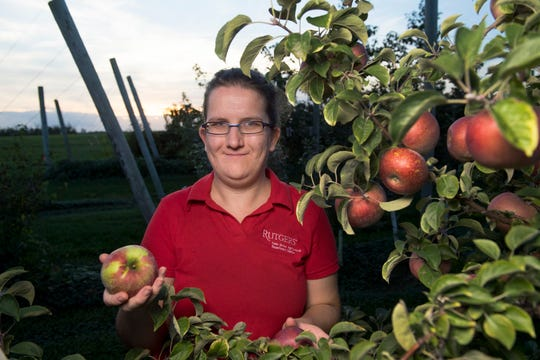Megan Muehlbauer, the Hunterdon County agent at Rutgers University's New Jersey Agricultural Experiment Station, has been working on a hard cider apple trial at the Snyder Research and Extension Farm. She hopes to revive the state's hard cider industry.
