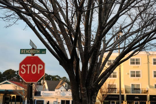 A tree stands on Rehoboth Avenue in Rehoboth Beach, Delaware.