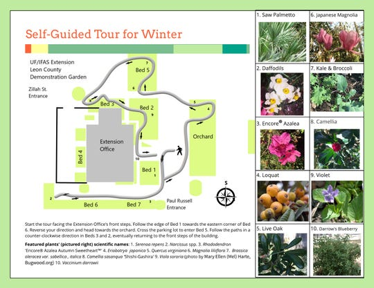The UF/IFAS Extension Leon County winter guided tour brochure contains a map and photos of plants that are featured for the season.
