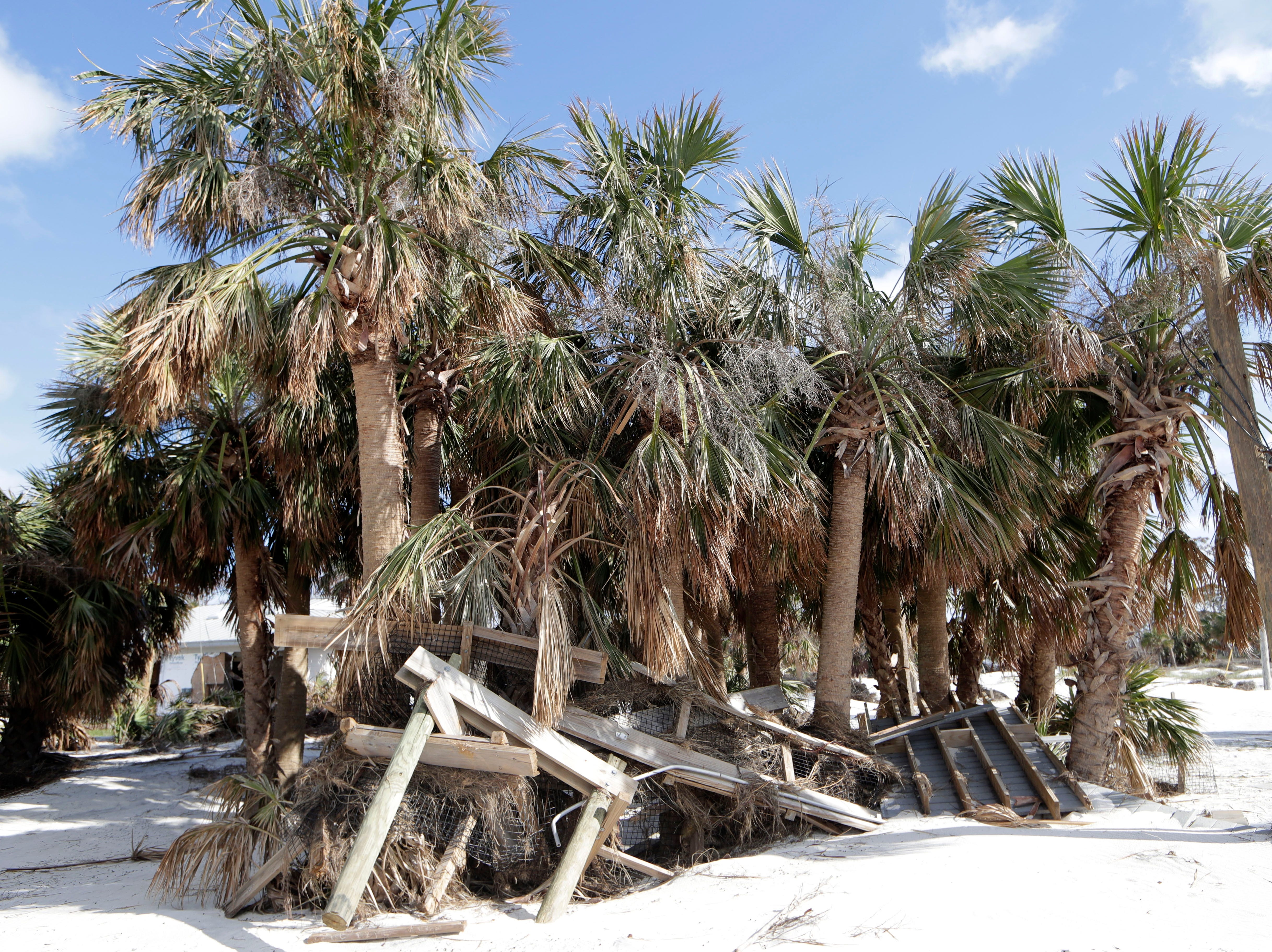 Part of the boardwalk that once led from the center of St. Joseph Peninsula State Park to the shoreline is now tangled with palm trees, Monday, Jan. 14, 2019. Hurricane Michael hit the panhandle three months prior and left a mess of destruction behind.
