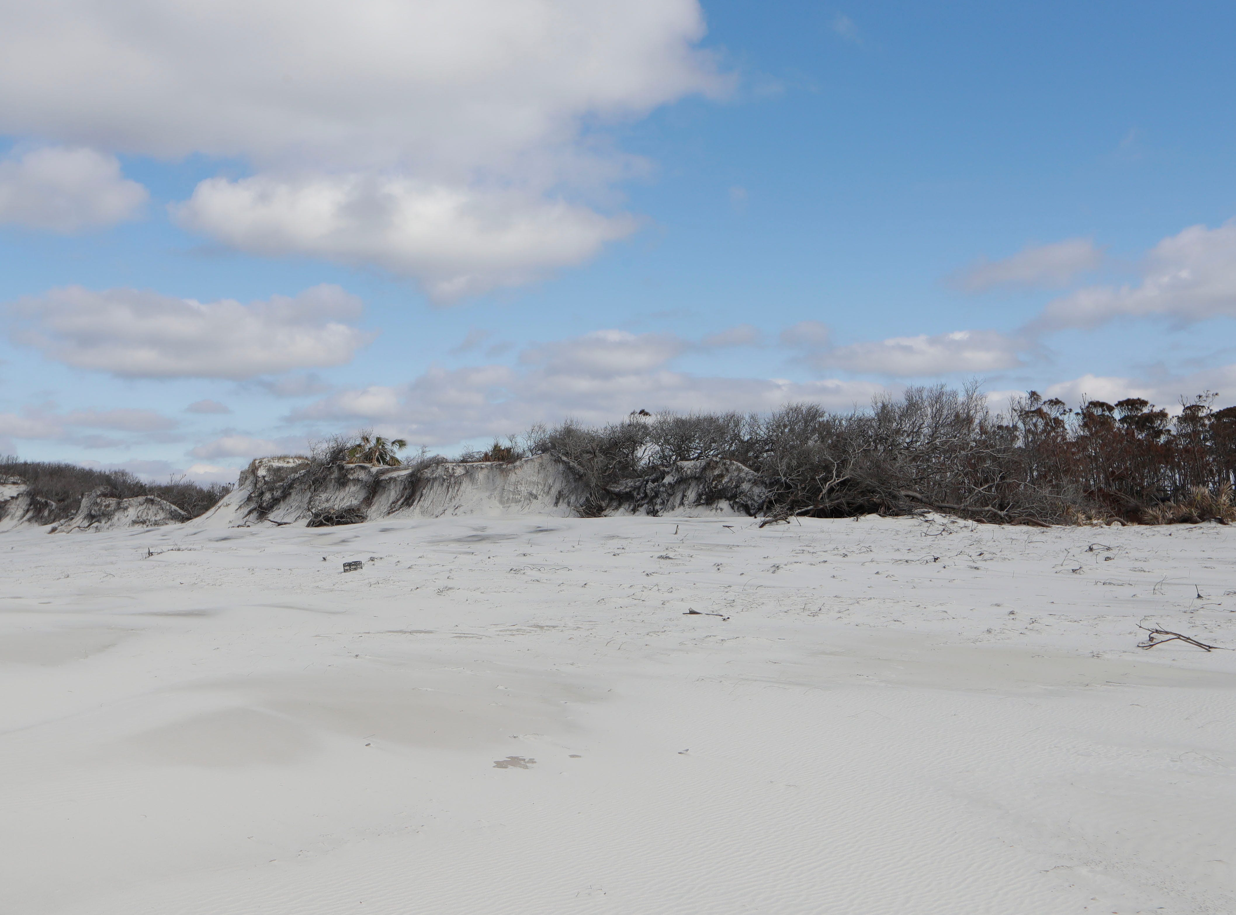In St. Joseph Peninsula State Park, Monday, Jan. 14, 2019, sand dunes are seen that were barely touched on the left by Hurricane Michael but on the right is vegetation once covered by sand, unearthed by the destruction caused by Michael.