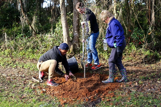 Volunteers planting a tree at the 2018 Arbor Day event.