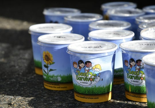 Cups filled with sunflower seeds sit near a mobile classroom on Hurley Elementary Schools campus on Wednesday, January 16, 2019. Students planted the seeds and were given them to take home to watch them grow.