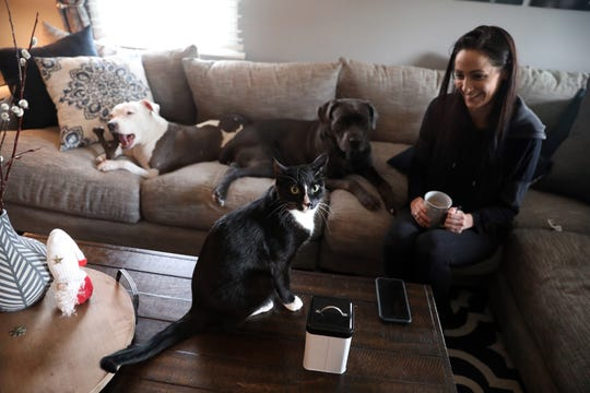 Ziggy the cat poses for a picture as Nicole Morandy, 29, and dogs Zeus, left, and Zora sit by at home in White Plains Jan. 10, 2019. Morandy has five pets; two dogs and three cats, that she describes as her children. After one of her dogs were sick she found a more holistic approach to providing for their medical care, which includes feeding them a raw diet.
