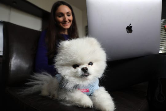 "Caicos, a three year-old teacup Pomeranian, sits beside her owner, Kris Ruby, as she works on her computer at their home in White Plains Jan. 10, 2019. Ruby, 32, describes Caicos as the ""love of her life"" and gives him the very best treatment in everything from gourmet pet food to personalized accessories."