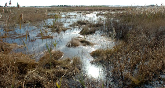 Delaware alphabet: C is for the Coastal Zone Act. It was meant to protect Delaware's natural treasures such as these wetlands at Prime Hook National Wildlife Refuge along Rt. 16.