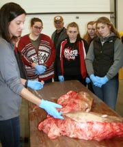Dr. Laura Hernandez offered a detailed explanation of a dairy cow's mammary system.
