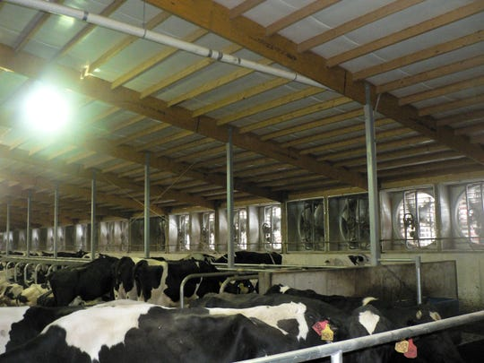 Willard and Brent Schuh, Freedom probably had Wisconsin's first (September 2005) cross ventilation dairy barn.