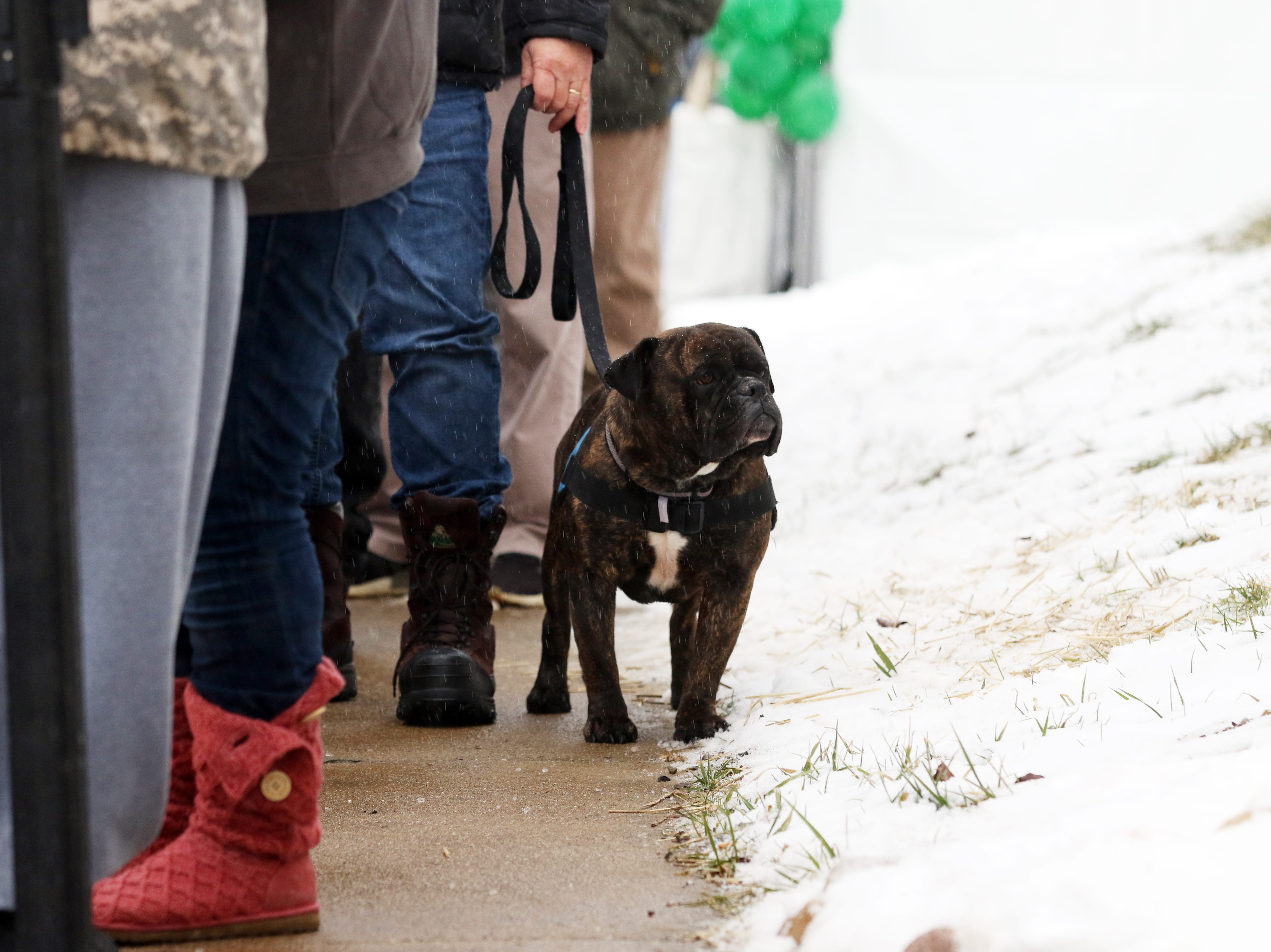 Dave William's service dog Chains waits in line outside the CY+ Dispensary in Wintersville on Wednesday.