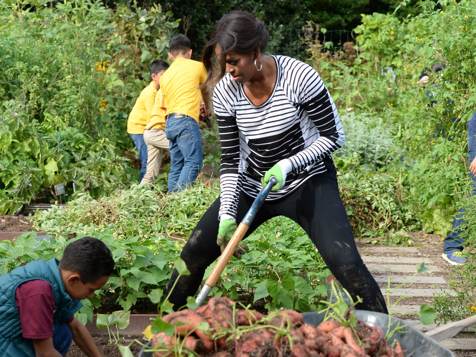10/14/14 3:31:44 PM -- Washington, DC, U.S.A  -- First Lady Michelle Obama and school children work on the annual fall harvest of the White House Kitchen Garden. --    Photo by H. Darr Beiser, USA TODAY Staff ORG XMIT:  HB 131868 WHgarden 10/14/2014 (Via OlyDrop)