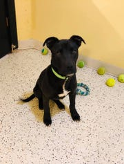 Rudolph is a puppy that was euthanized at a shelter, but lived. Now he is up for adoption at a new shelter, King's Harvest Pet Rescue in Davenport.