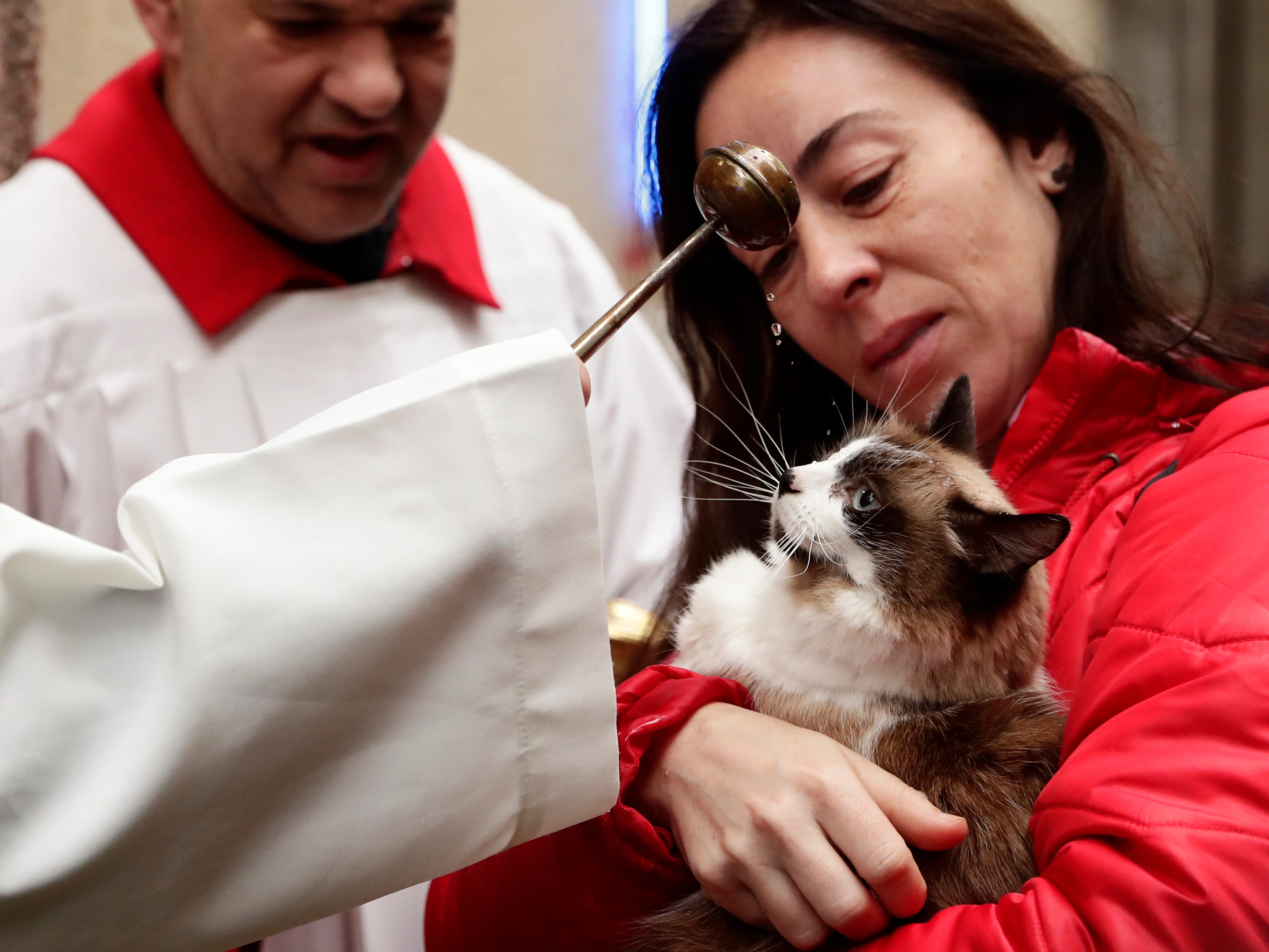 A priest anoints a cat at the San Anton church during the feast of Saint Anthony, Spain's patron saint of animals in Madrid, Spain, Thursday, Jan. 17, 2019. The feast is celebrated each year in many parts of Spain and people bring their animals to churches to be blessed.