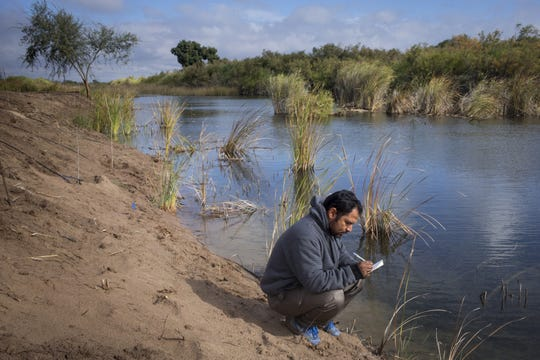 Carlos Cordova tracks vegetation along the Colorado River, December 7, 2018, at the El Chausse Restoration Area. The river is filled mostly sub-surface agricultural return flows from all the surrounding farm area.