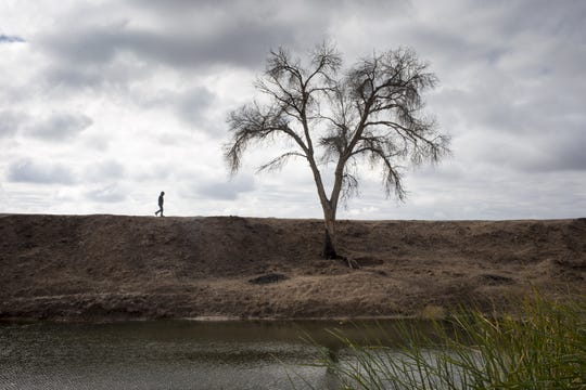 Ricardo Escobedo walks on the bank of the Colorado River, December 7, 2018, at the El Chausse Restoration Area in Mexico. Escobedo is the area's manager.