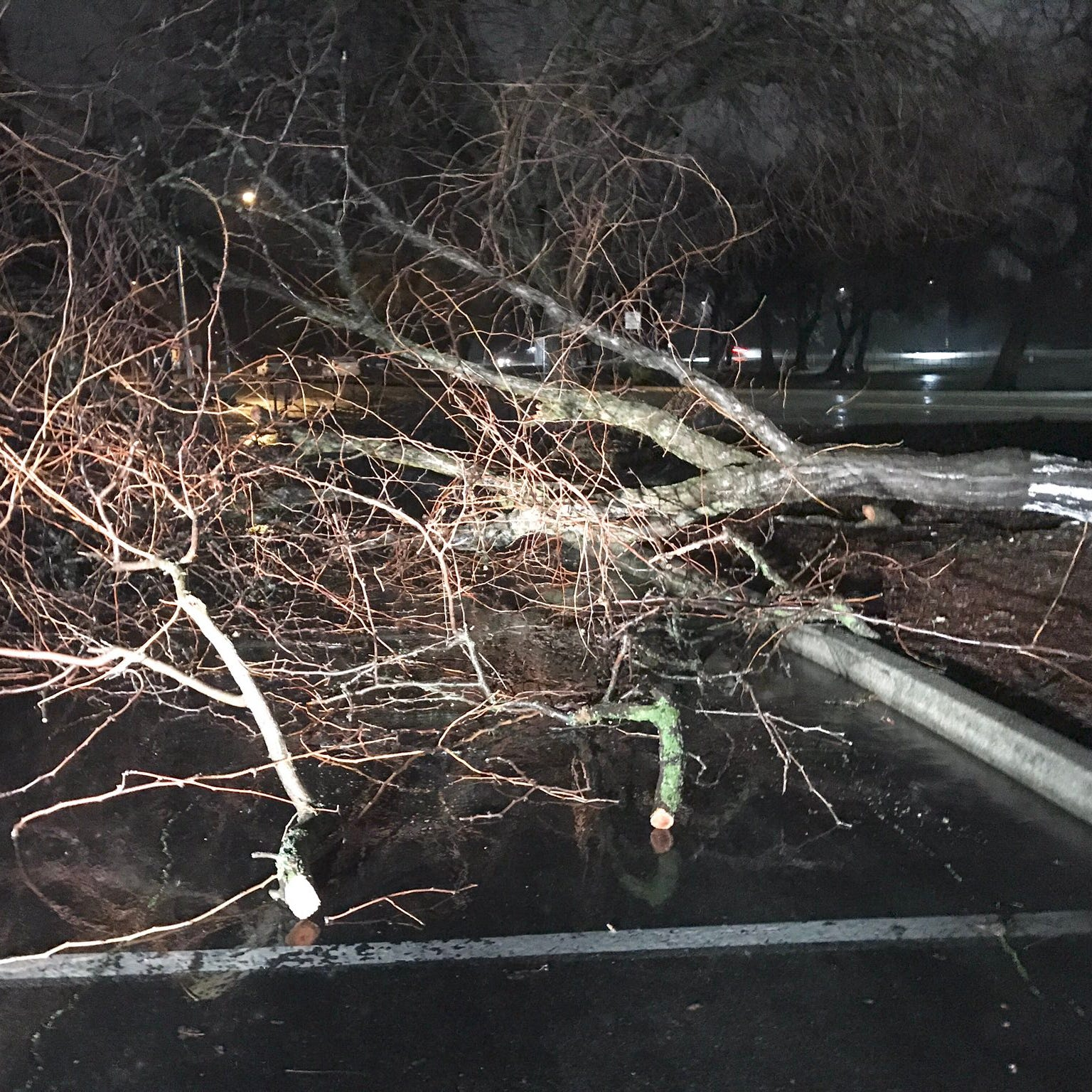 Heavy rain causing power outages, flooding and downed trees