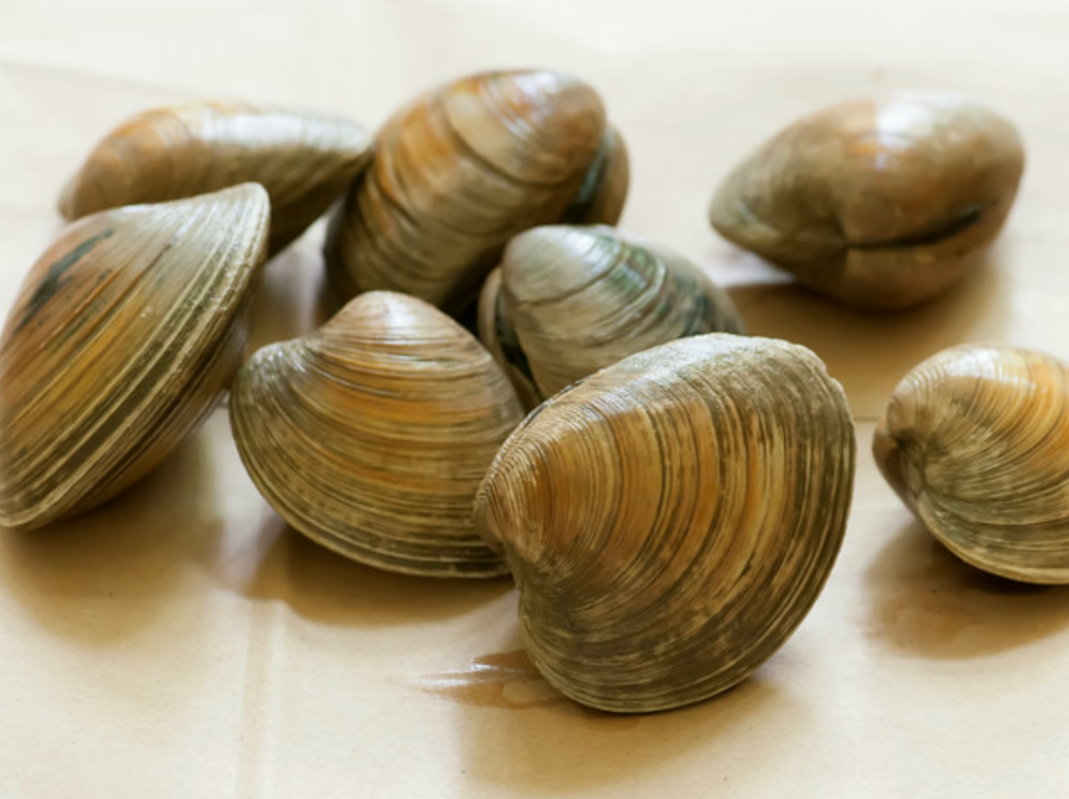 Delaware alphabet: Q is for Quahogs. Also called hard clams, theysupport commercial and recreational clammers in in the Rehoboth and Indian River bays.