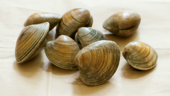 Delaware alphabet: Q is for Quahogs. Also called hard clams, they support commercial and recreational clammers in the Rehoboth and Indian River bays.