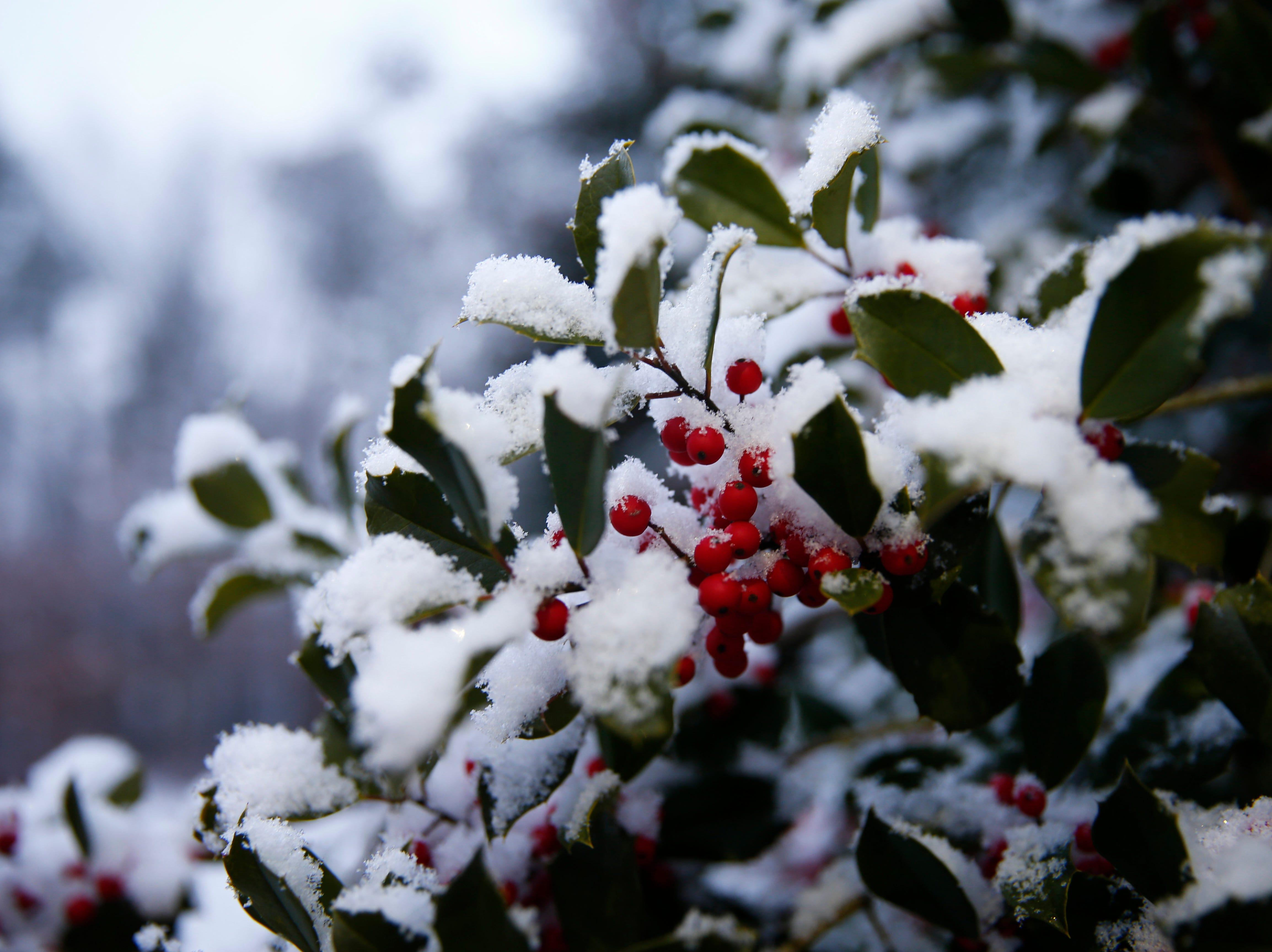 Snow clings to bushes at the James Howard Transportation Center in Brick Township Friday morning, January 18, 2019.