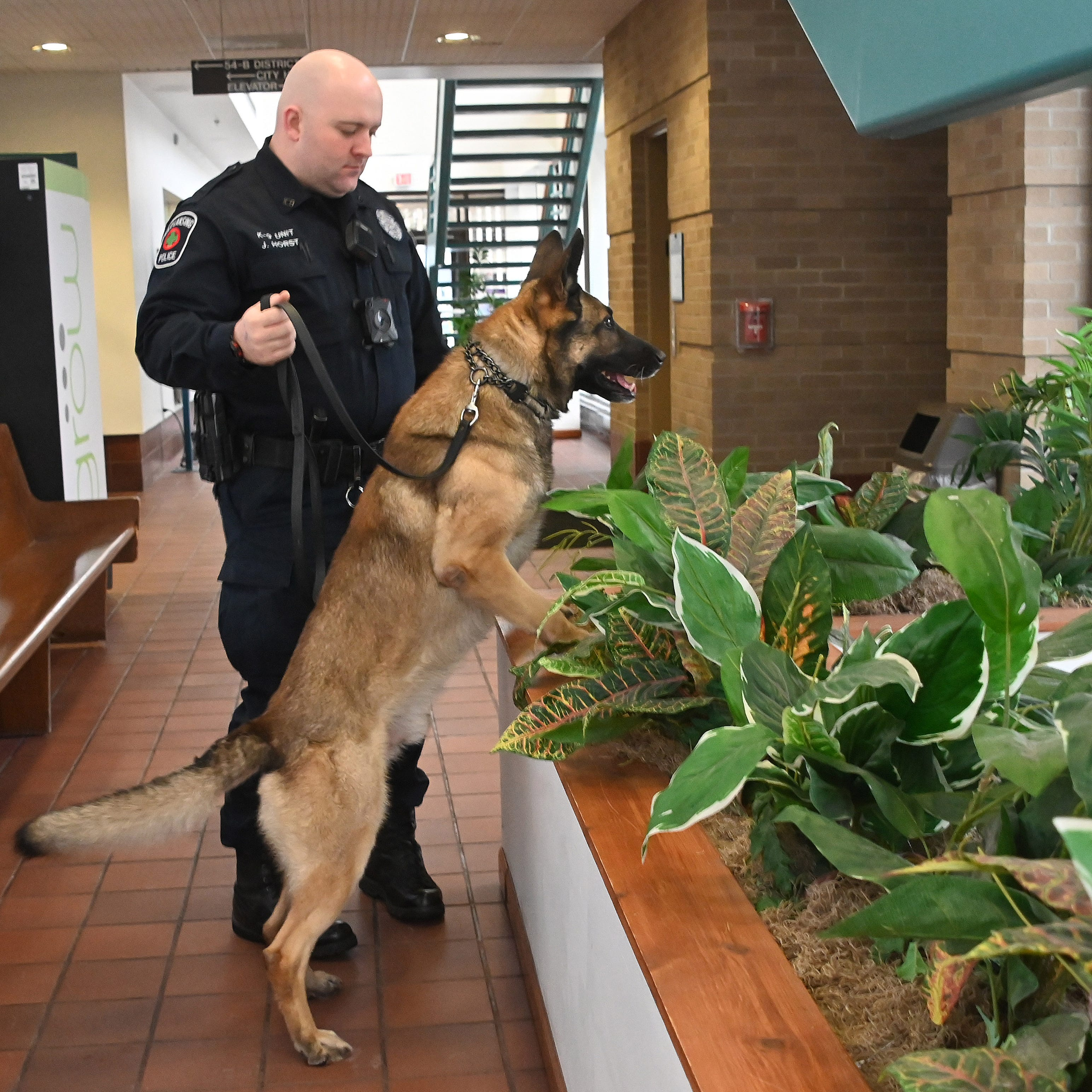 Marijuana legalization may lead to changes in police dog training