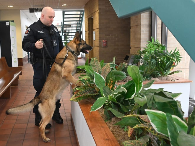 East Lansing police officer Justin Horst and his dog Aeres search for explosives in a building in East Lansing.  Most of Michigan's drug-sniffing police dogs were not trained to differentiate between a legal substance like marijuana and an illegal substance such as cocaine.