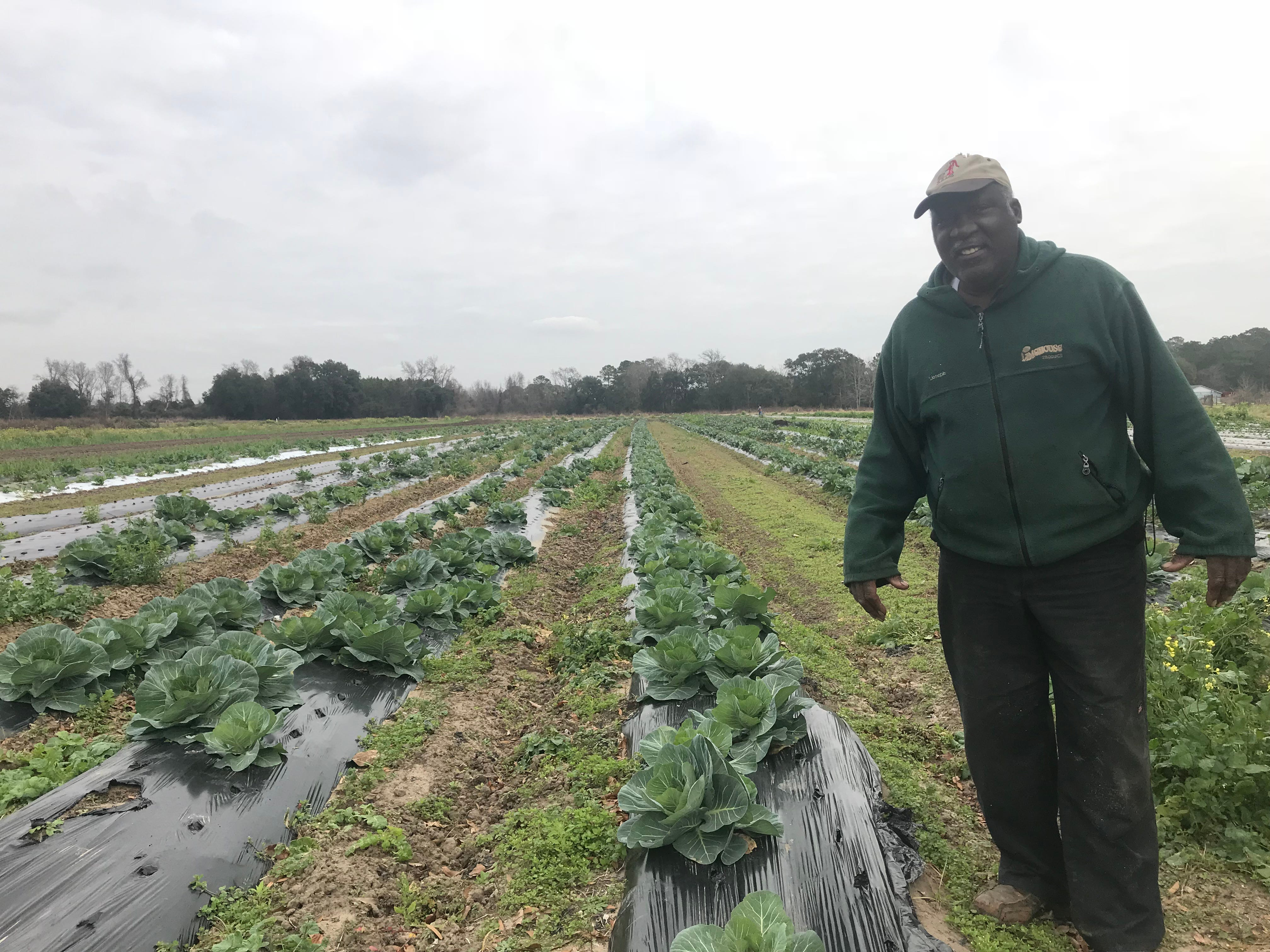 Joseph Fields stands next to rows of cabbage at his family farm on Johns Island, S.C.
