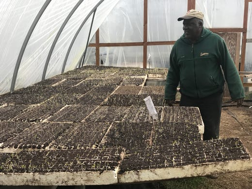 Joseph Fields inspects kale seedlings inside the greenhouse at his family farm on January 15, 2019.