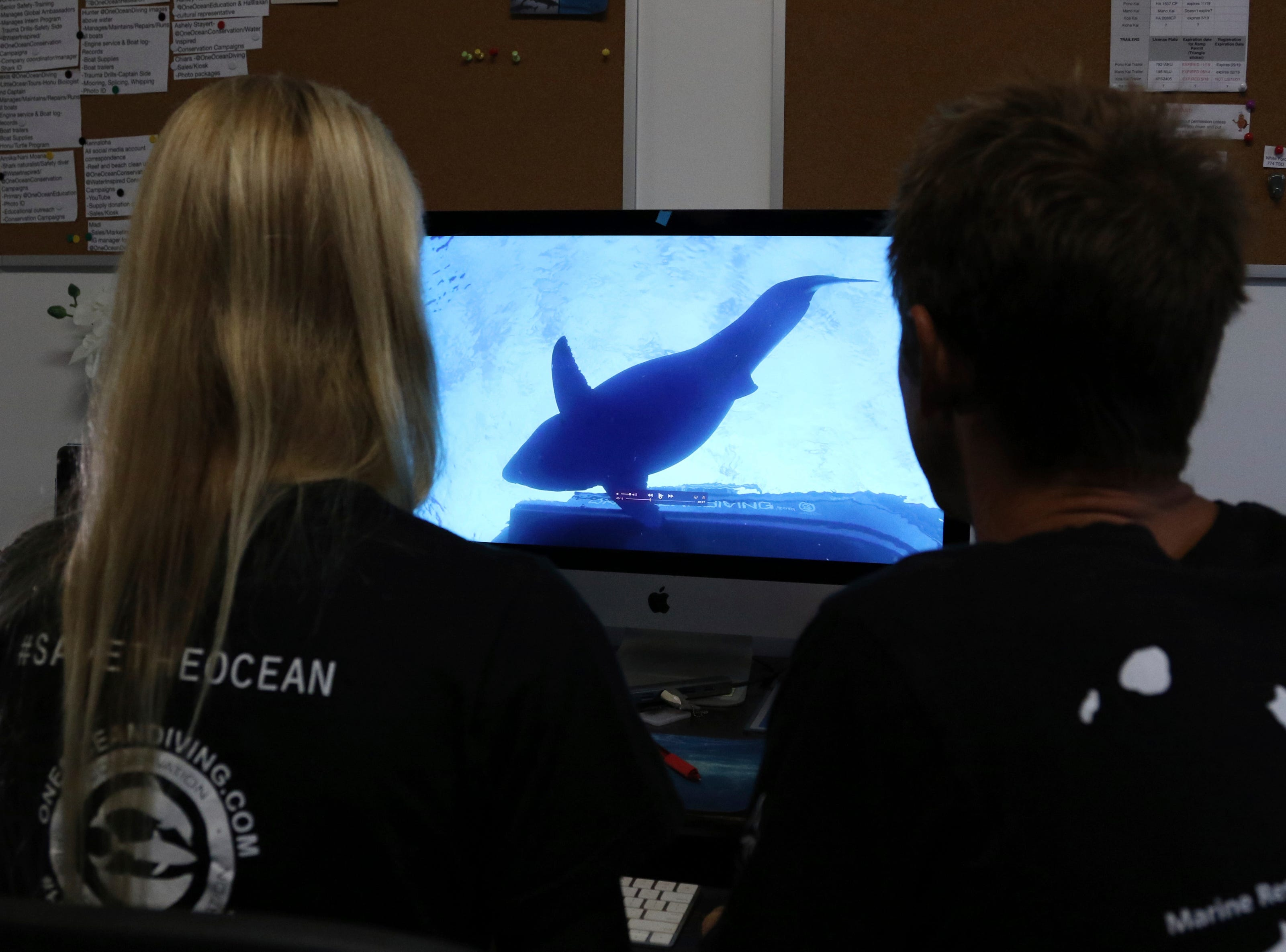 Juan Oliphant, right, and Ocean Ramsey, co-founders of One Ocean Diving and Research, look at footage their encounter with a great white shark, Thursday, Jan. 17, 2019 in Haleiwa, Hawaii. Ramsey told The Associated Press on Thursday that images of her swimming next to a huge great white shark prove that these top predators should be protected, not feared. (AP Photo/Caleb Jones)