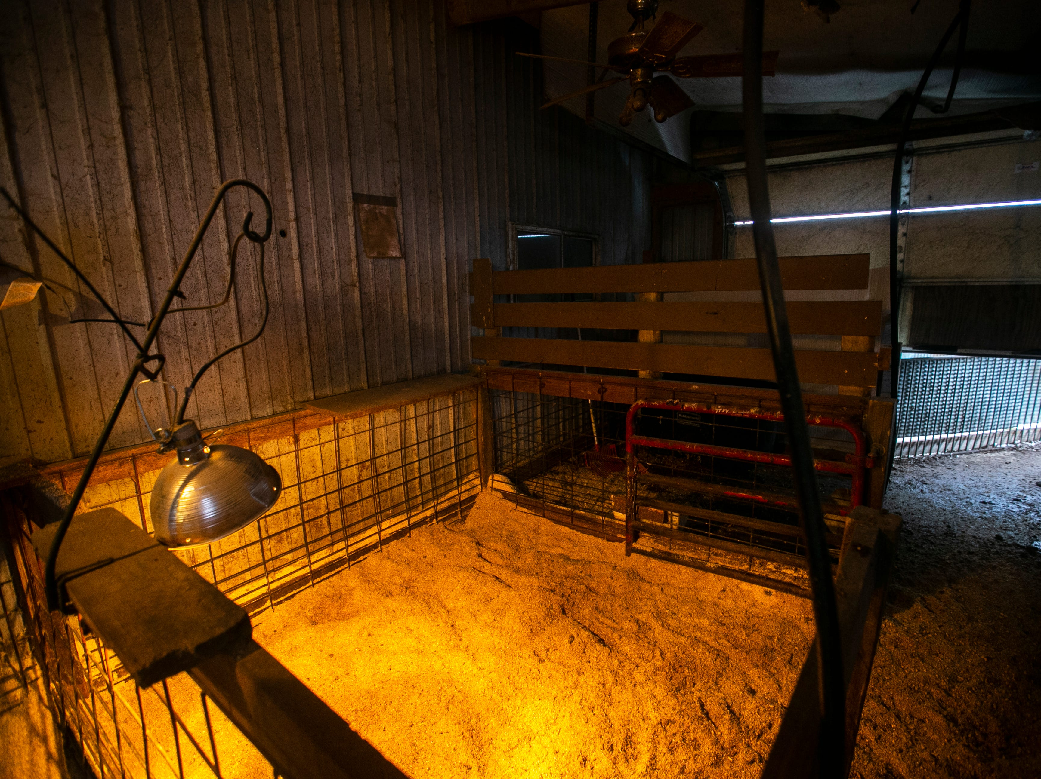 A heat lamp inside a barn where pigs can come and sleep during the night is seen on Thursday, Jan. 17, 2019, at Natural Oak Pork farm in West Branch, Iowa.