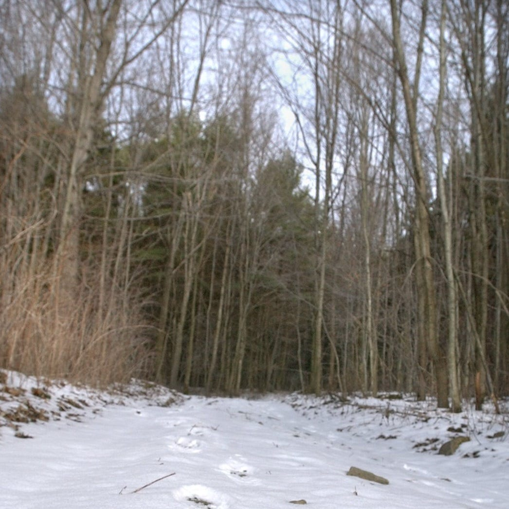Your Turn: Preserve Tompkins County's old forests