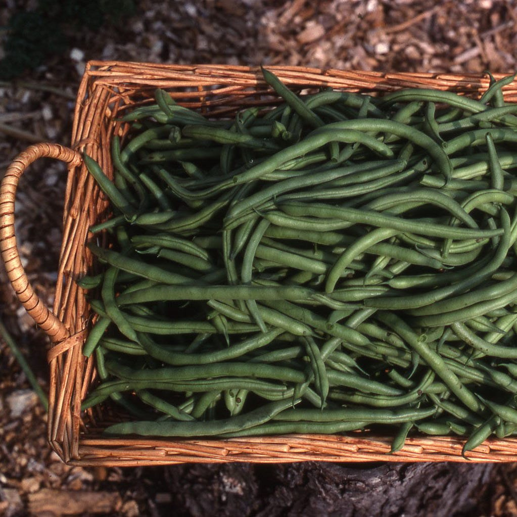 In The Garden | Recommended veggies for 2019 garden