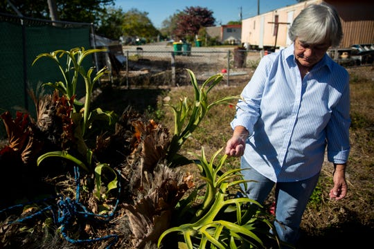 Deborah Coe runs a hand over a staghorn fern, the only thing she still has from her mother, in Immokalee on Friday, January 18, 2019. The fern, which was the size of a basketball when her mother got it in the 80s, was hanging in a tree that fell during Hurricane Irma, but the plant survived.