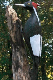 Thomas carved this ivory-billed woodpecker last year, at age 94.
