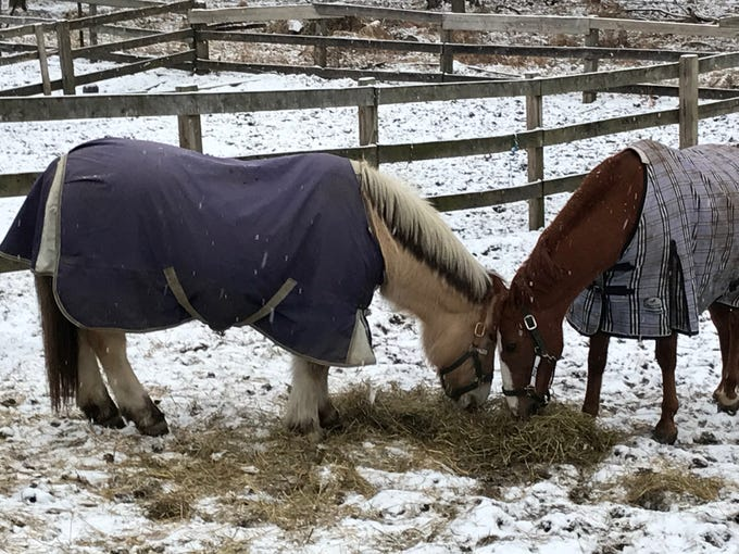 A little snow doesn't bother these horses at the. Passaic County Equestrian Center on Garret Mountain. Just give them a blanket and they're happy.