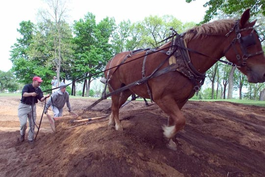 Paul Albanese utilizes some horse power to shape a fairway.