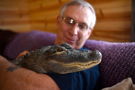 Joie Henney of Strinestown recently certified his rescued American alligator Wally as an emotional support animal. Friday, January 18, 2019John A. Pavoncello photo