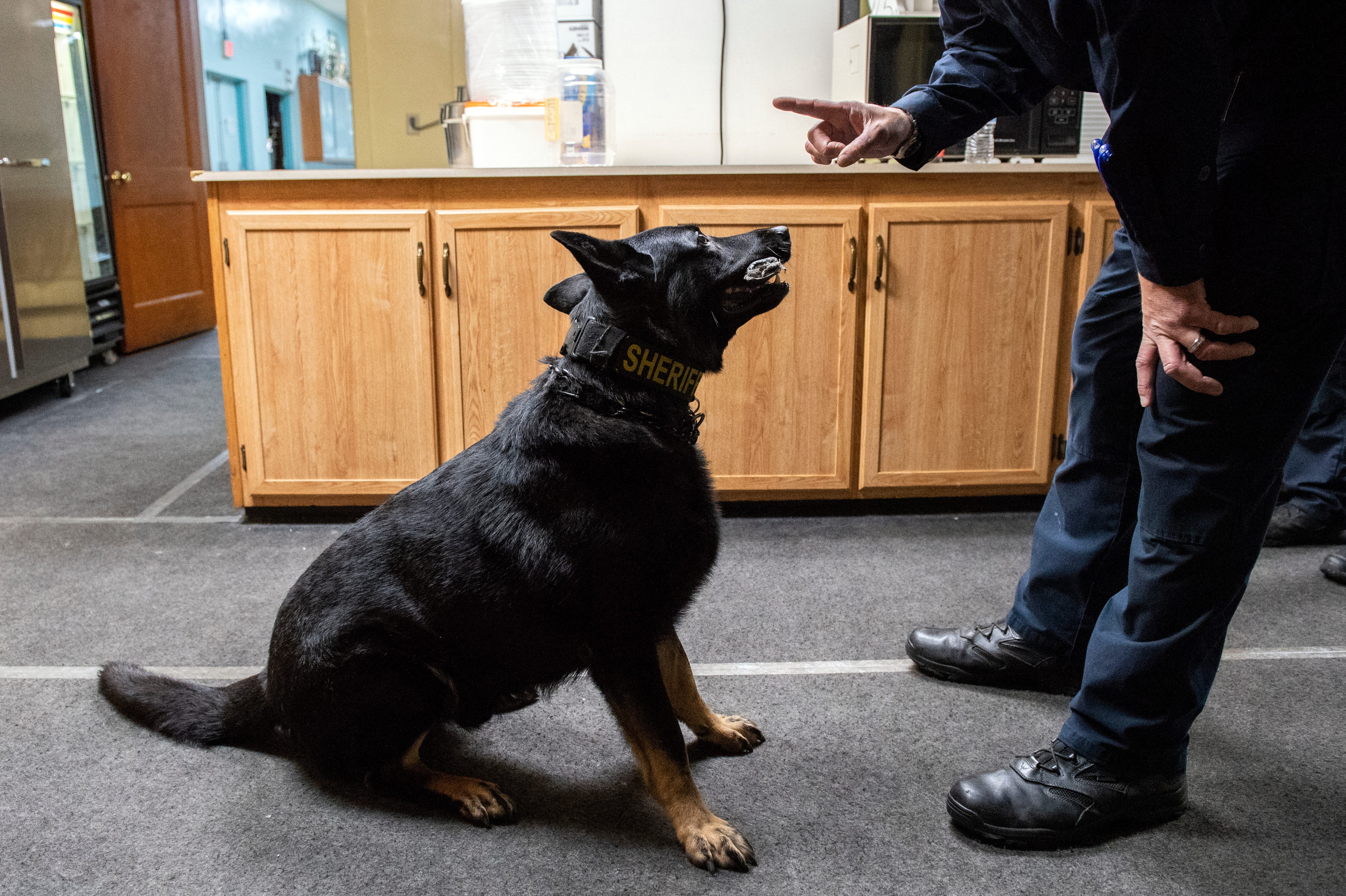 Watch: K9 unit trains for drugs, explosives in Dover