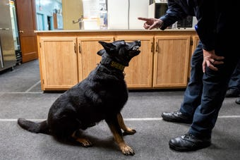 The York County Sheriff's Office's K-9 unit — four dogs — need to train a minimum of 16 hours per month. But they usually try to get a little more in.
