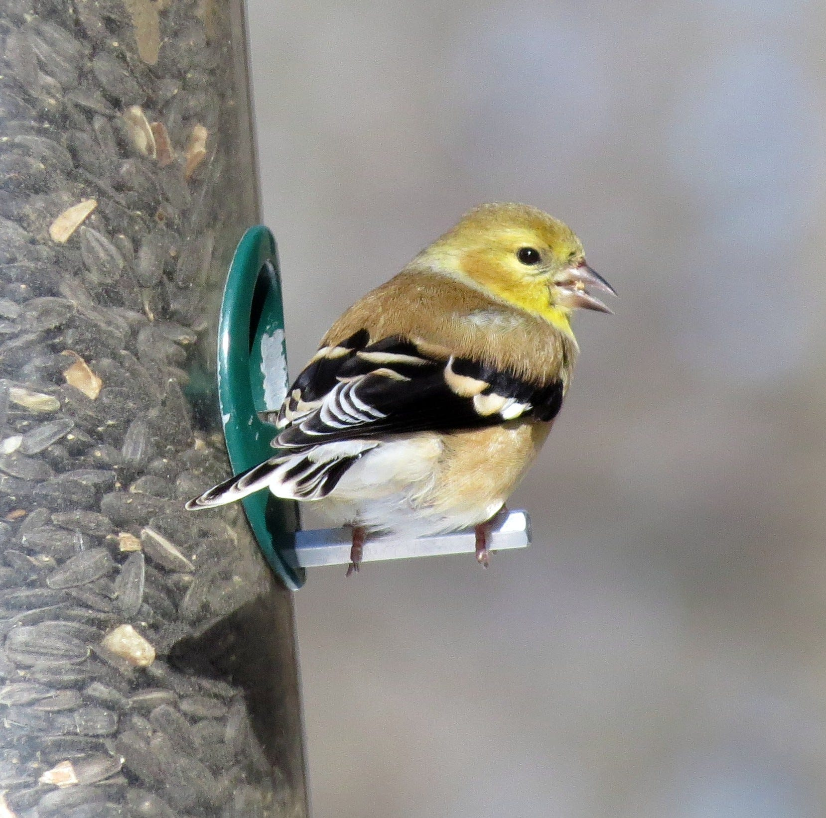12 ways to help Delaware birds, wildlife survive this winter