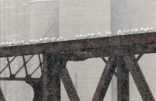 Gulls rest on a bridge over the Muskingum River as snow moves into the area.