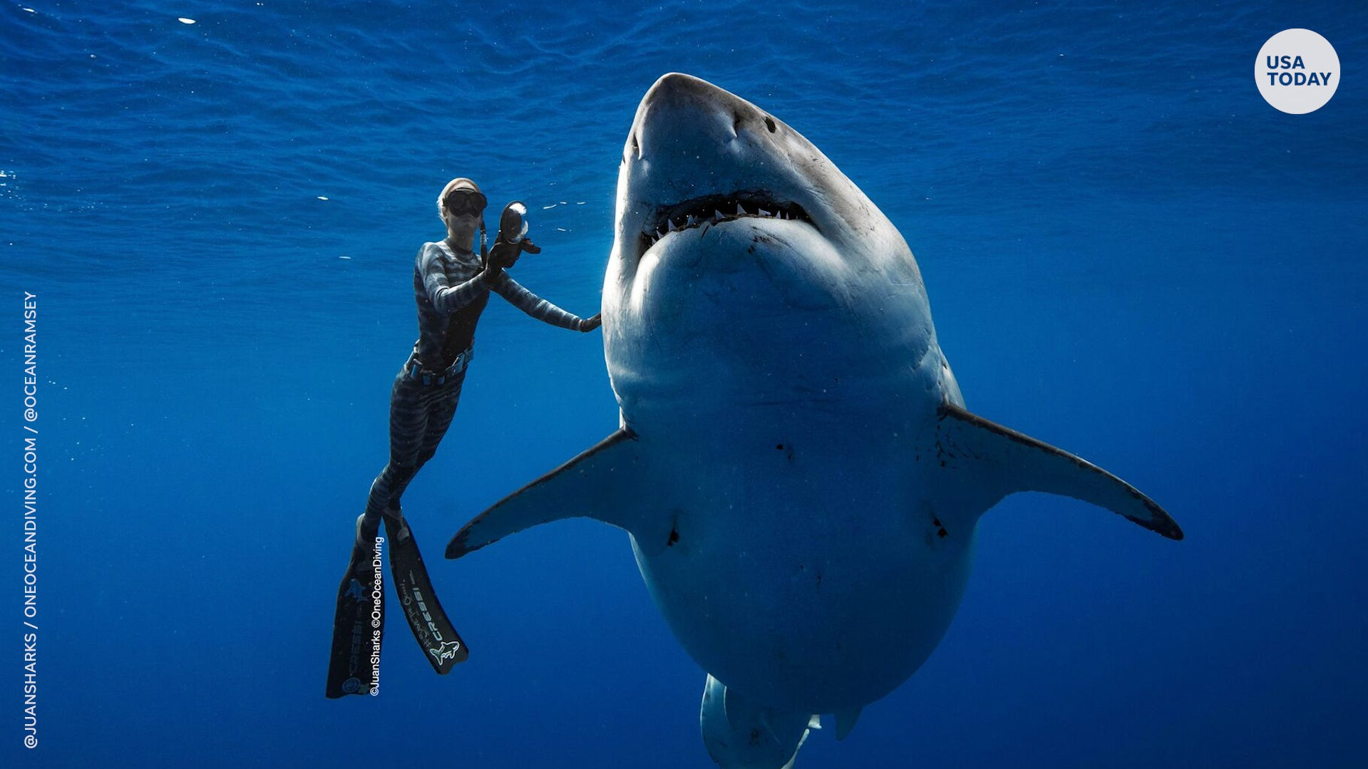 "Professional divers believe this shark is ""Deep Blue,"" one of the largest great whites on record."