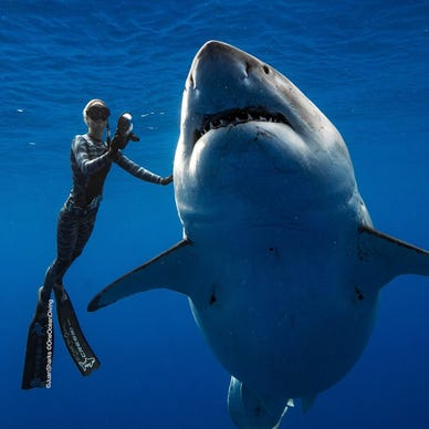 Shark week 2019: After sharks kill snorkeler, what to know