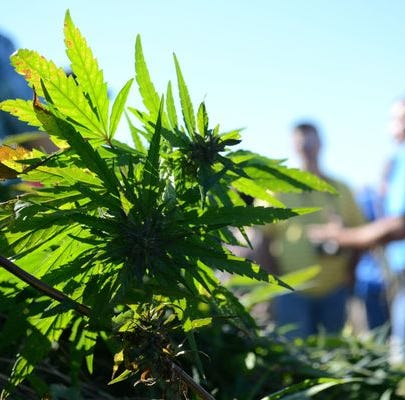 Bill legalizing hemp growth and sales in Indiana clears final hurdle, heads to governor