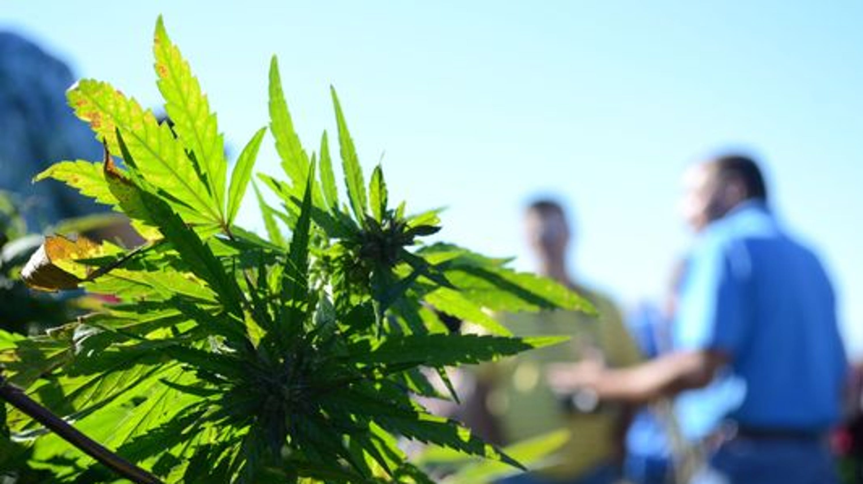 Indiana hemp bill clears final hurdle, heads to governor
