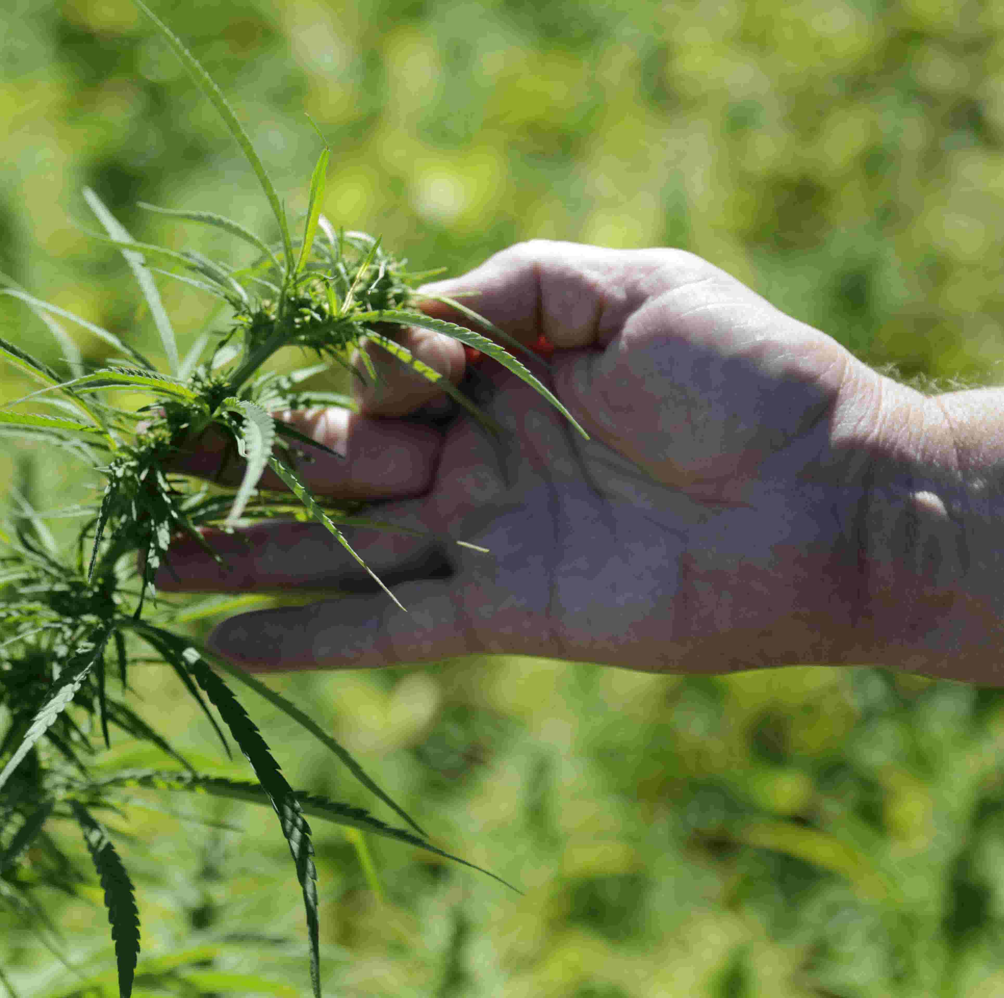 How legal hemp could change Indiana