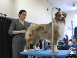 Olivia Persinger describes what a judge is looking for during a dog show.