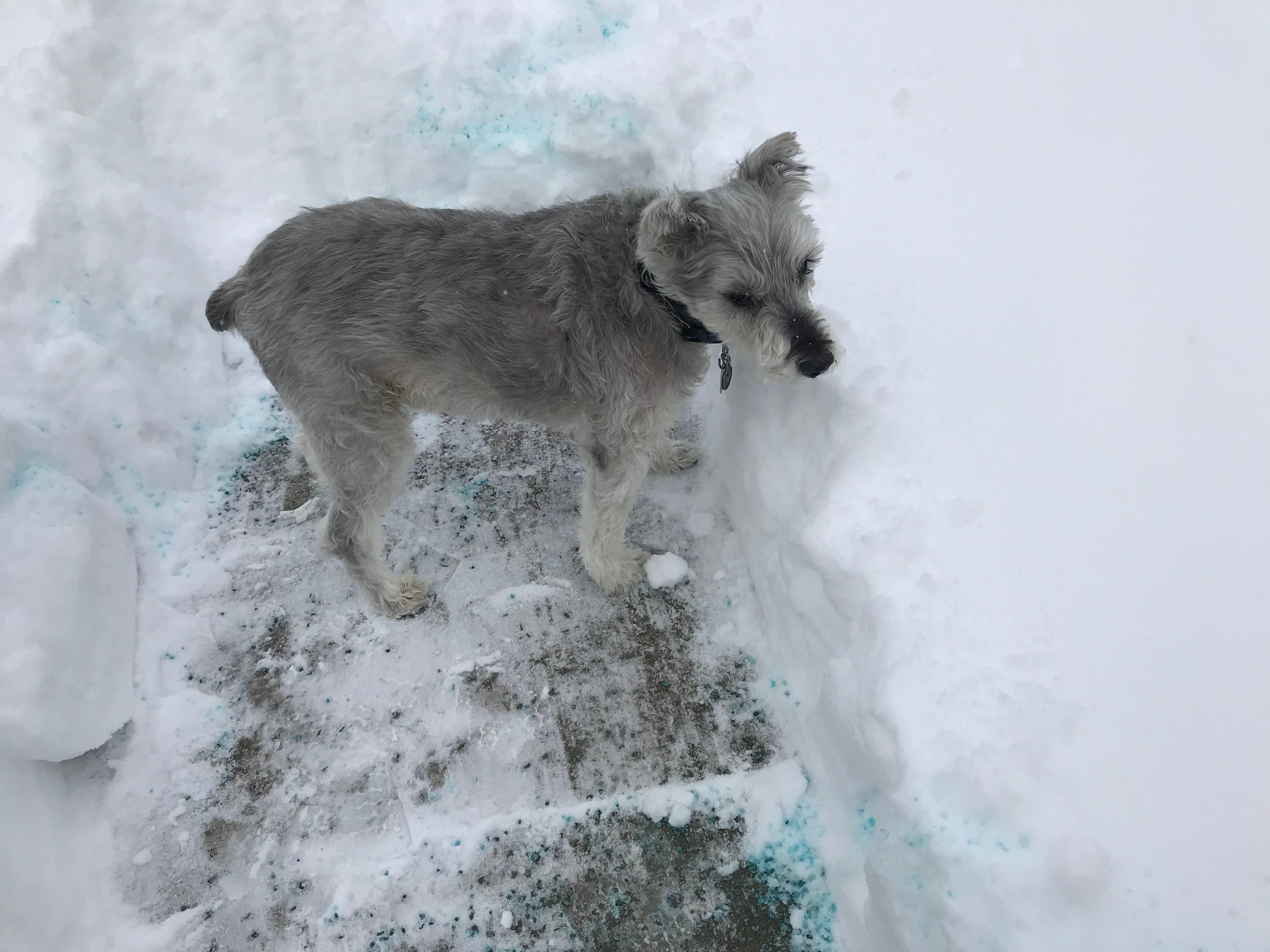 Snowy scenes in Binghamton Sunday.