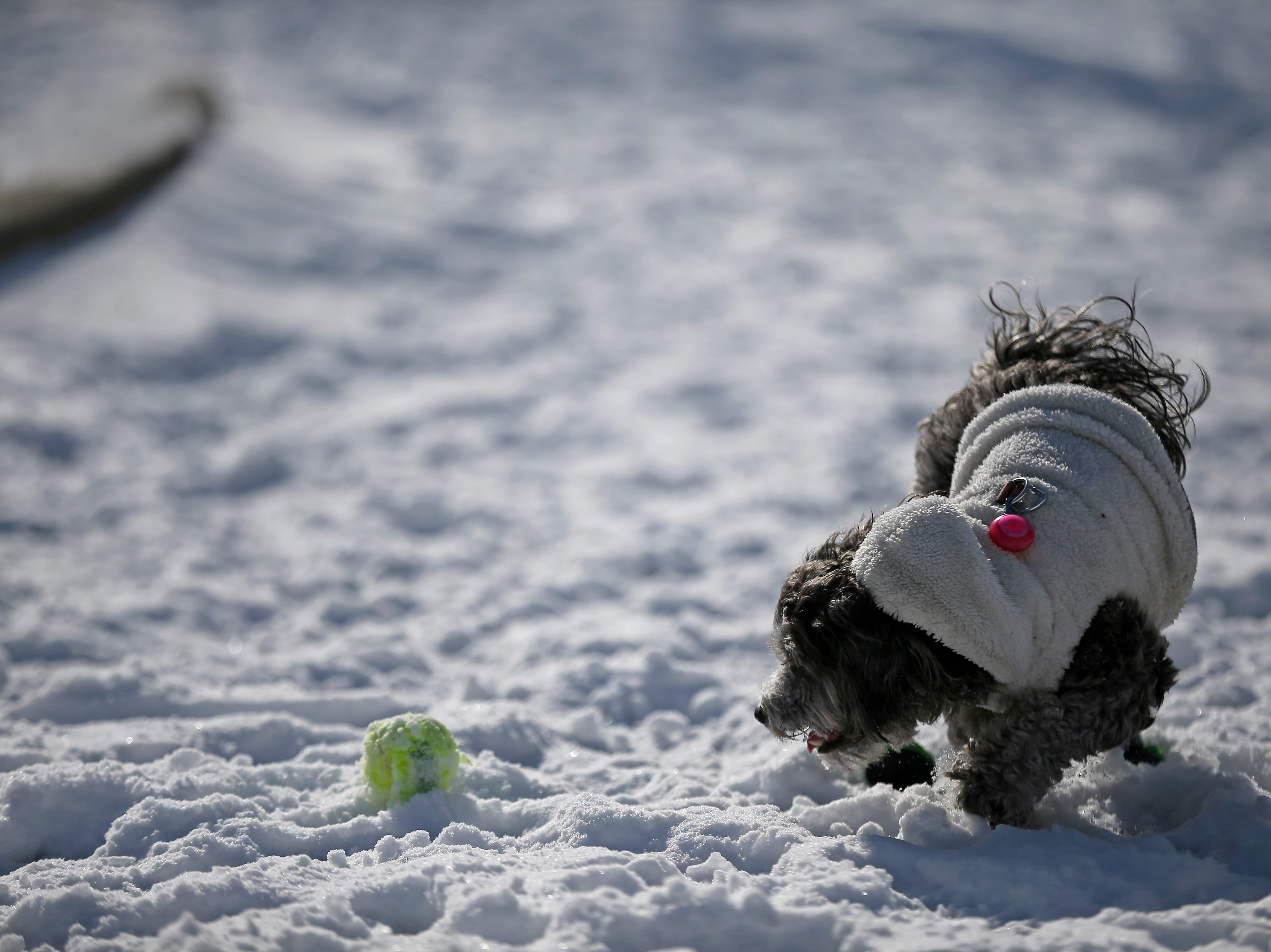 Metzli, 1, plays with her owner Jazmin Bernal, 27, of Over-the-Rhine, at Washington Park in the Over-the-Rhine neighborhood of Cincinnati on Sunday, Jan. 20, 2019. Temperatures remain below 15 degrees with windchills as low as 4 in the region Sunday.